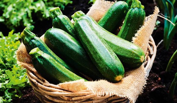 Courgettes bio local? Sud-Ouest de la France